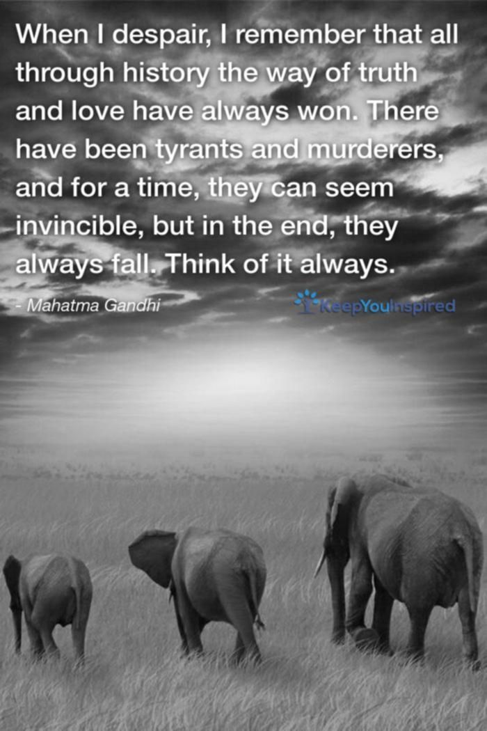 Elephant Quotes Gorgeous Funniest Elephant Quotes MOST FUNNIEST ELEPHANT QUOTES Pinterest