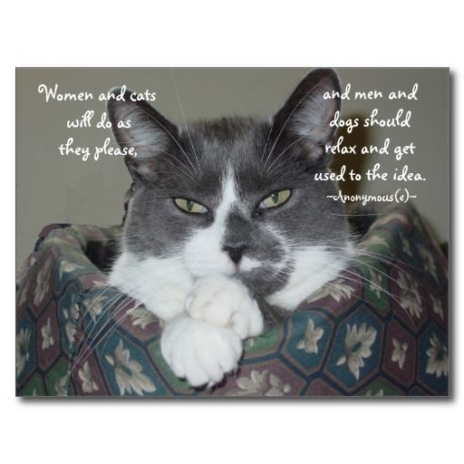 Kitty Quote Postcard:  Women and cats will do as they please and men and dogs should relax and get used to the idea