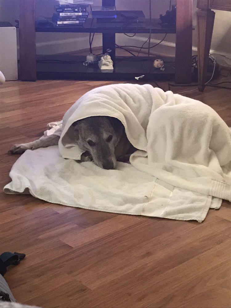 Sasha Hates Bath Time Dogpictures Dogs Aww Cuteanimals