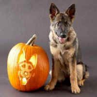 Pumpkin Pooches - Humorous, Funny and Cute Animal Photos: Humor Page: Archive