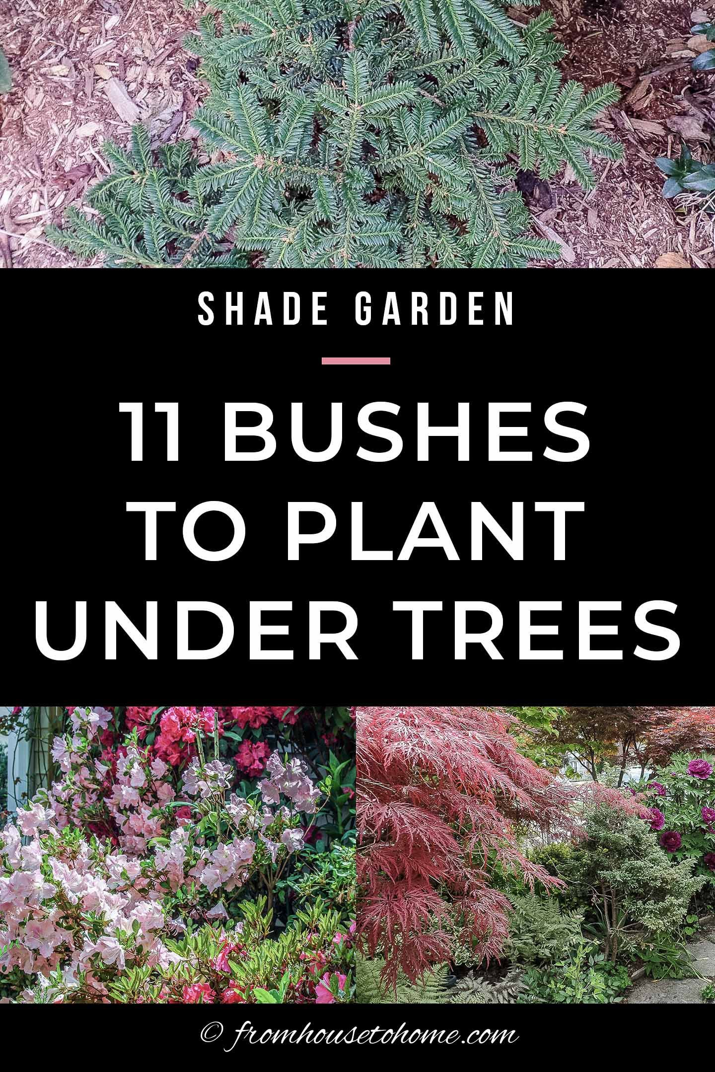 Shade Loving Shrubs 11 Beautiful Bushes To Plant Under Trees In
