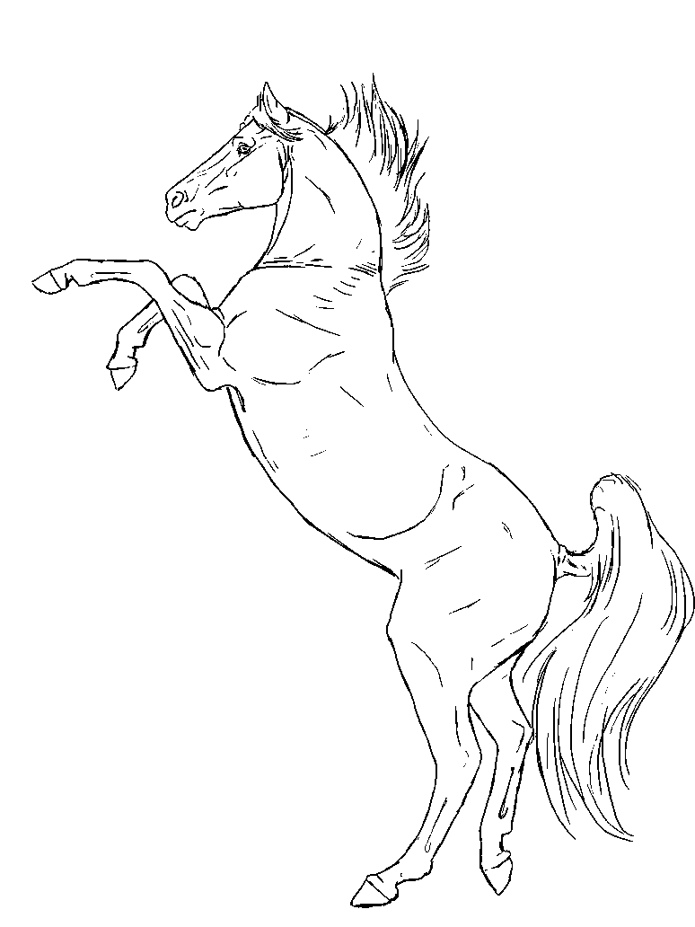 horse head front view drawing - Google Search | Patterns: horses ...