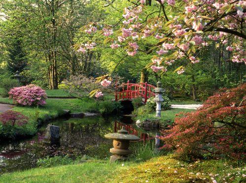 Jardin japonais | Jardins, Parcs & Bassins | Pinterest | Gardens