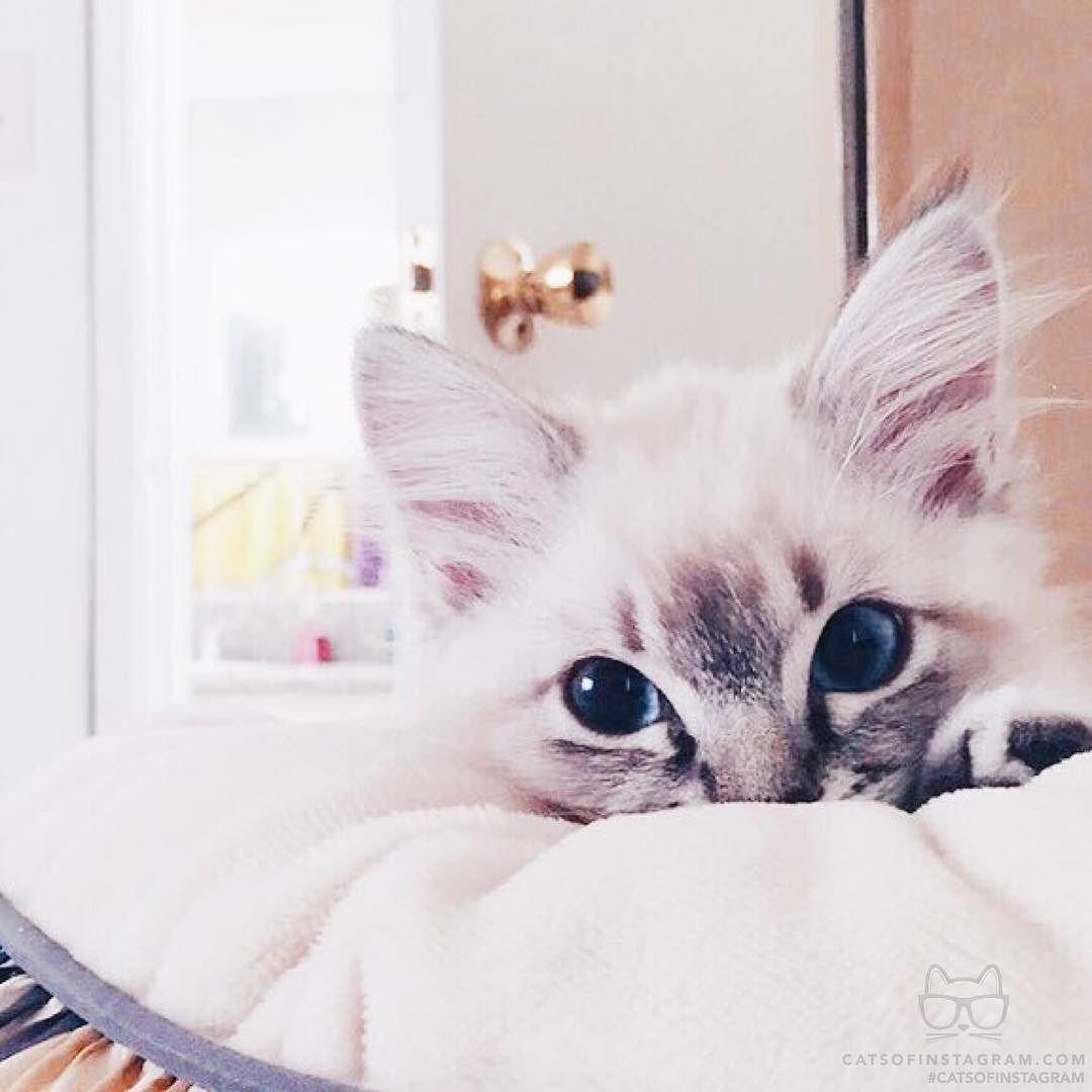 Cat Casino Instagram