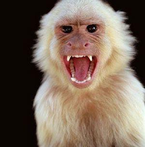 funky outbreak monkey dance 2 - YouTube
