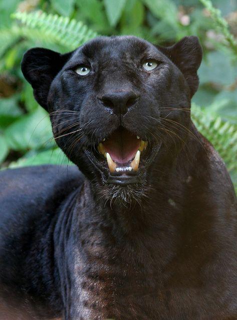 Leopardjumanji 55 Big Cat Rescue Big Cats Animals Beautiful