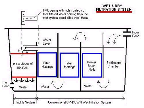 Koi forum nishikigoi japanese koi fish koi talk pond for Pond filter setup diagram