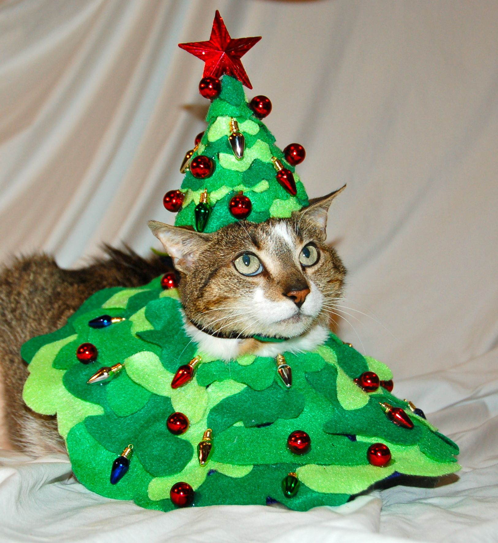 Oh Christmas Tree Oh Christmas Tree Get This Outfit Off Of Me Bob The Cat Christmas Cats Real Christmas Tree Christmas
