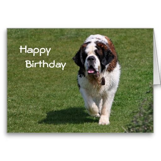 Saint Bernard Dog Photo Happy Birthday Card Zazzlecom