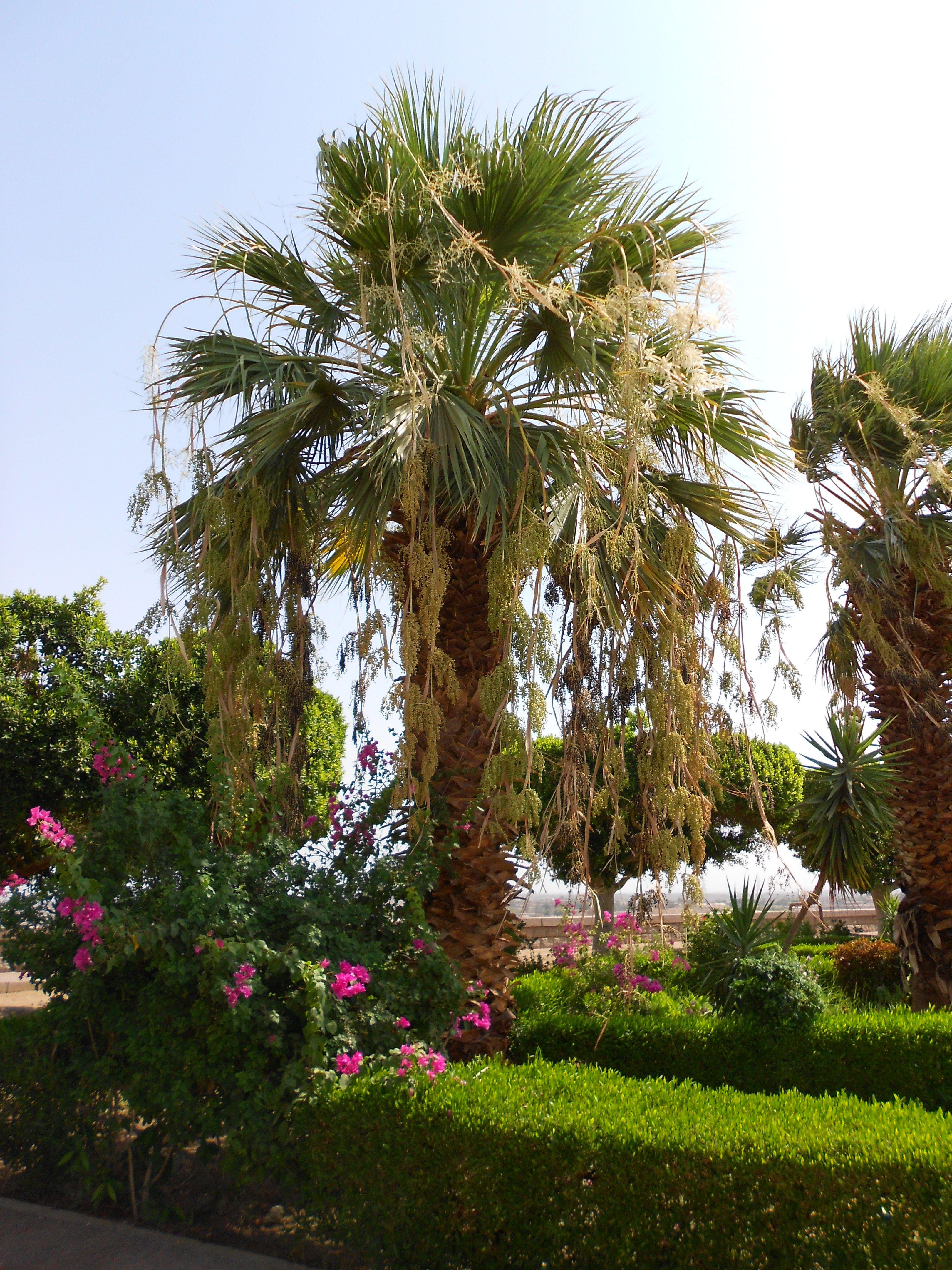 Garden - Aswan High Dam | Africa, Dubai, Egypt, Red Sea, Saudi ...