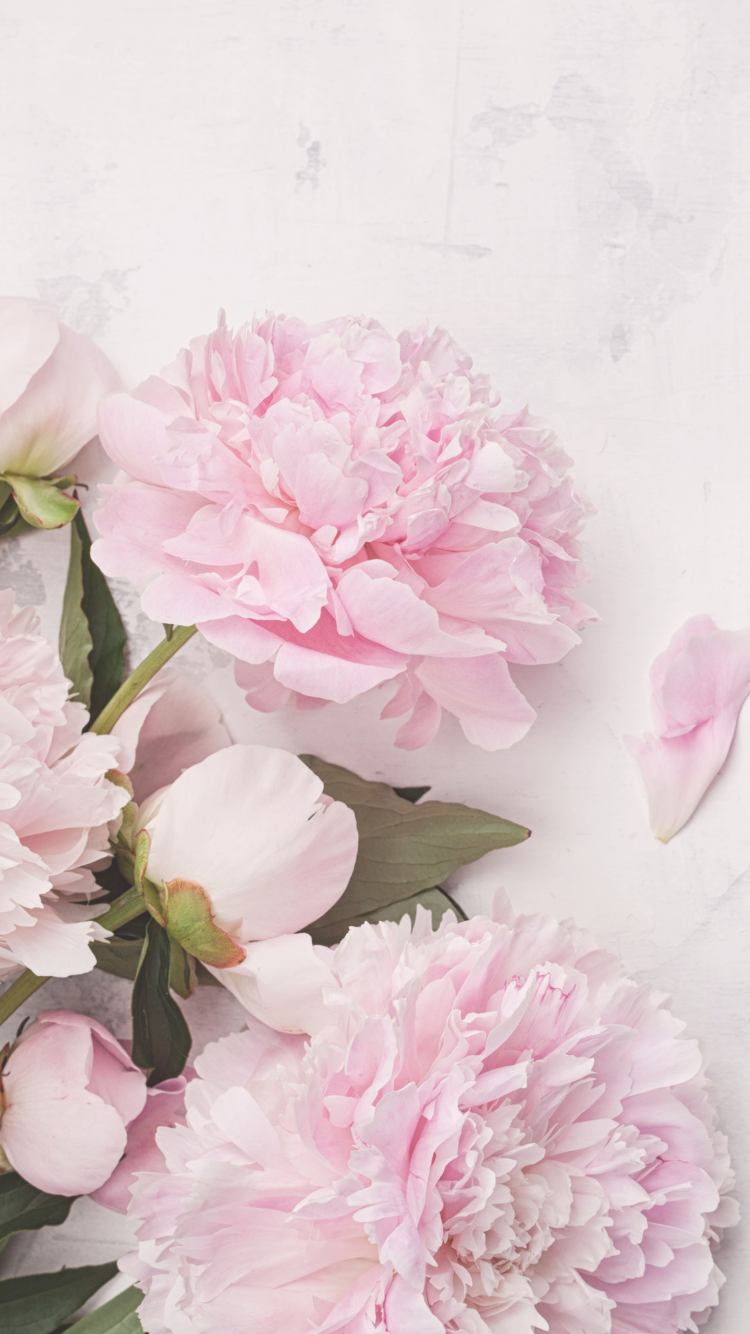 Free Iphone Wallpapers With Images Flower Backgrounds Peony Wallpaper Amazing Flowers
