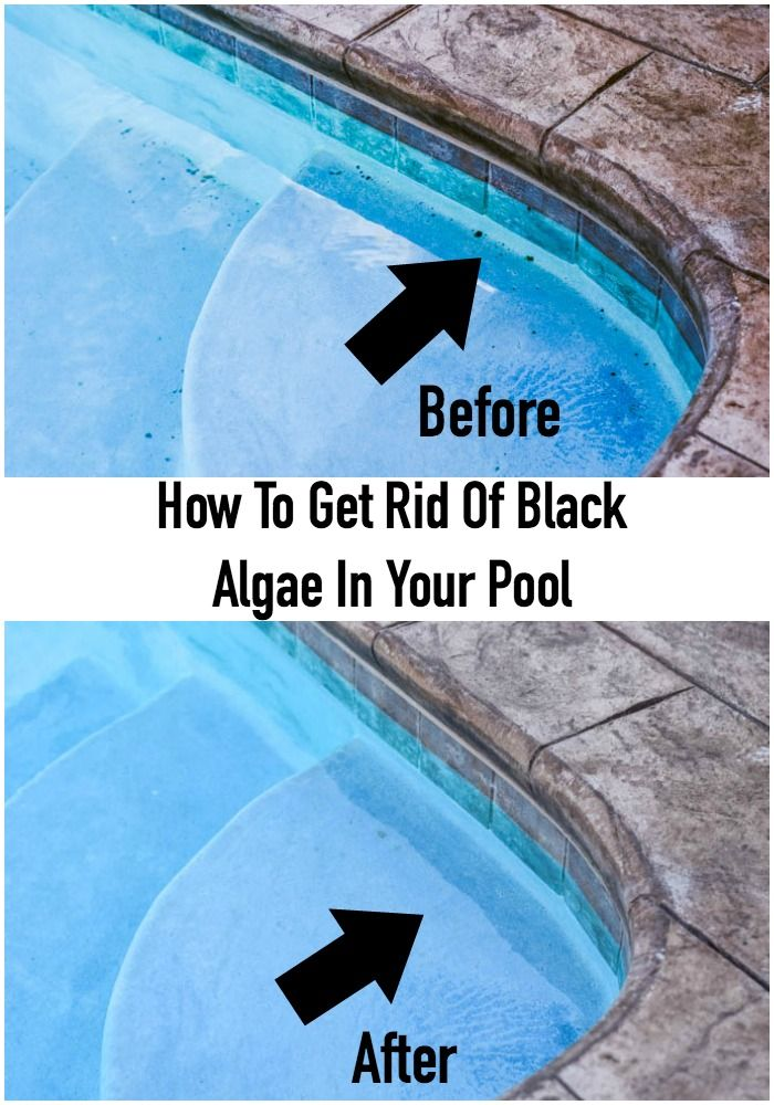 How to get rid of black algae in your pool folk for Using algaecide in swimming pool