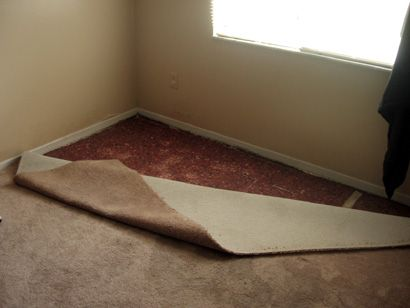 Water Damage Carpet Coastal Carpet Inspectors Carpet Cleaners Carpet Cleaning