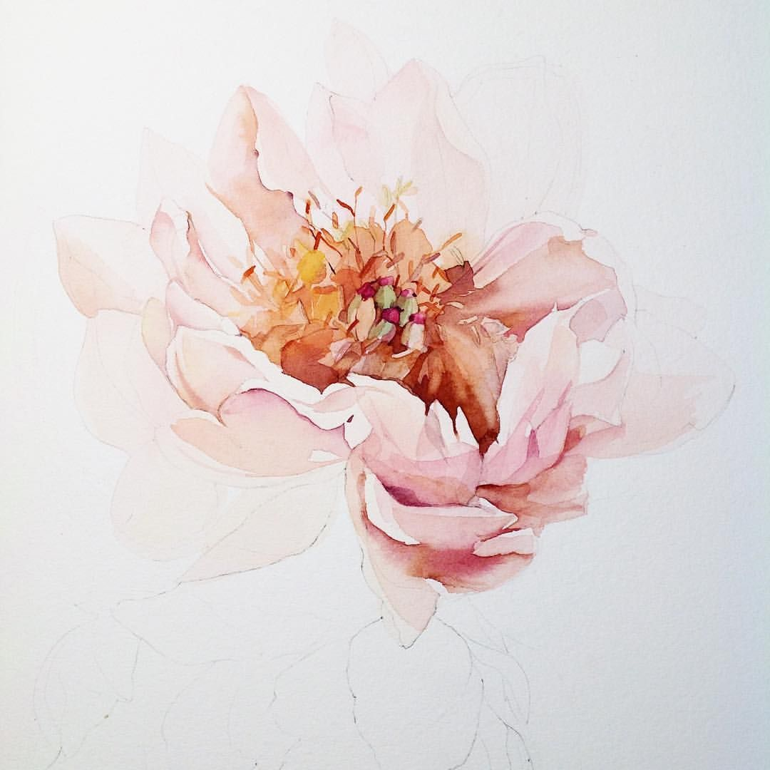 Pink Flower Watercolour Watercolor Flowers Flower Painting