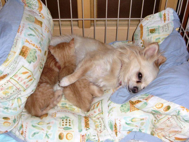 お名前 メリーちゃん 宮城県在住 チワワ メス 8歳 東日本大震災による津波で愛犬も危うく命を落とすところでした メリーと再会できたのは水が引き始めた震災三日目でした 近所の人がメリ チワワ 津波 お寺