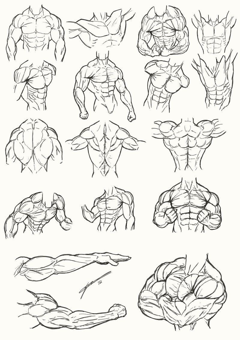 Buen día a todosles dejo unas referencias anatómicas del torso ...