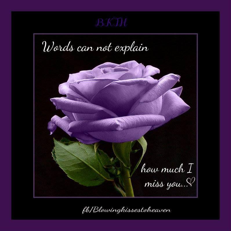 5 Purple Rose Rosa Bush Shrub Perennial Flower Seeds Gift Comb S H Purple Roses Flower Seed Gifts Flowers Perennials