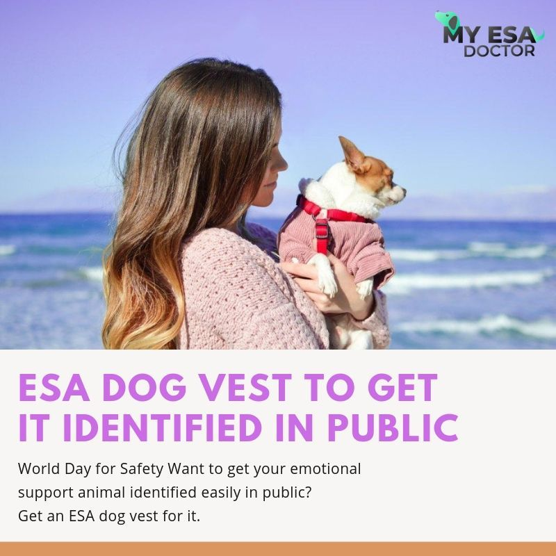 Get Emotional Support Animal Letter Online from My ESA