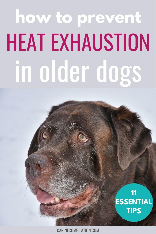 Pin On Best Senior Dog Care