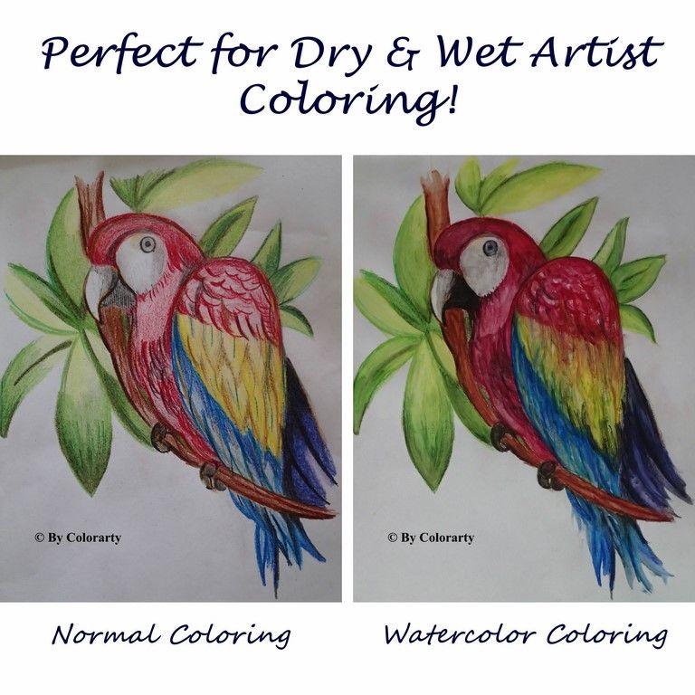 Colored Watercolor Pencils Color Pencil Illustration Coloring