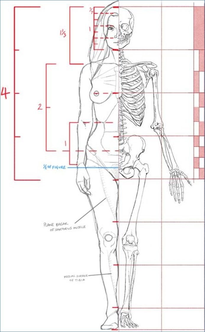 John Hartman Illustration Artistic Anatomy Dr Paul Richer
