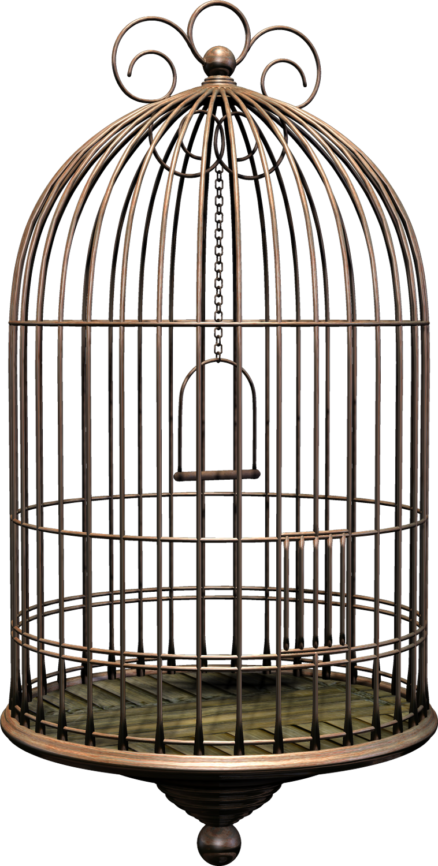 Bird Cage Png Image Bird Cage Bird Black Bird Cage