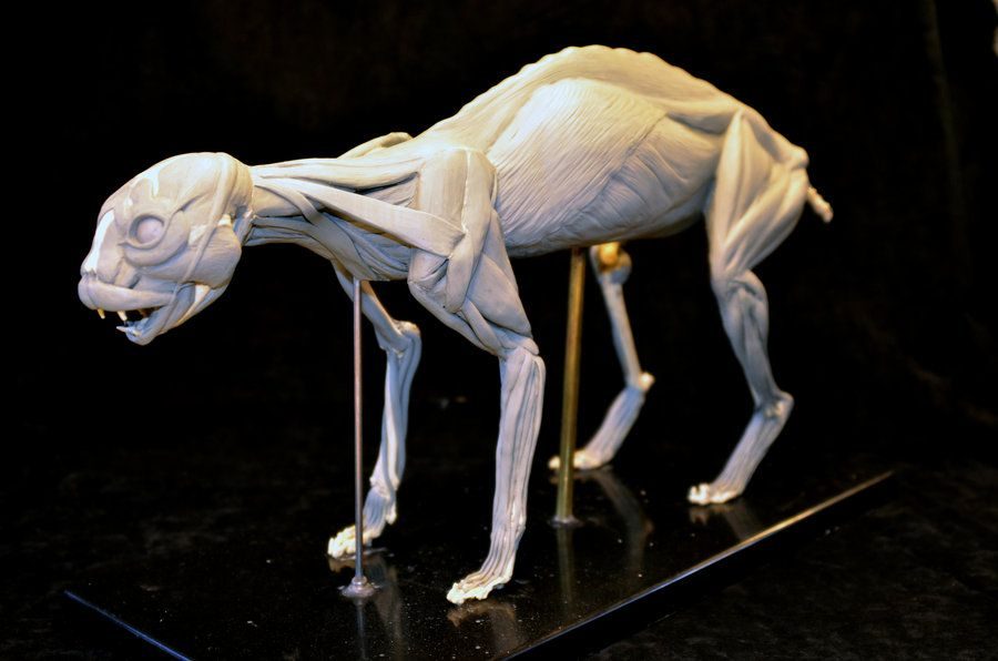 Pin by Robert R on Final Creature References | Pinterest | Animal ...