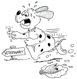 Medical emergencies in dogs happen without warning. Read