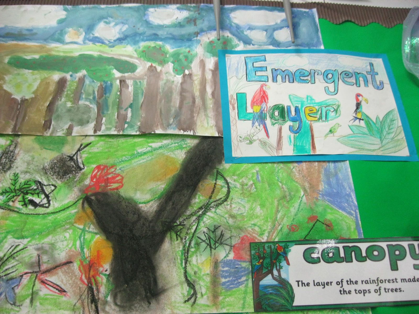 Year 3 Rainforest Topic KS2 (With images) Rainforest