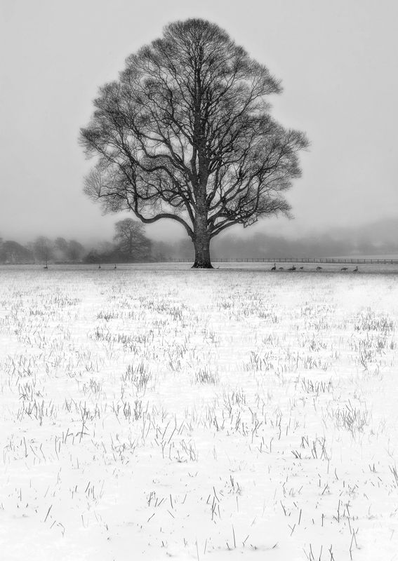Winter Tree in Wharfedale