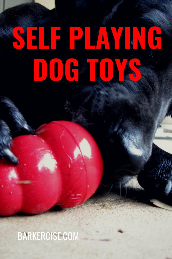 Self Playing Dog Toys Dog Toys Small Dog Toys Best Dog Toys