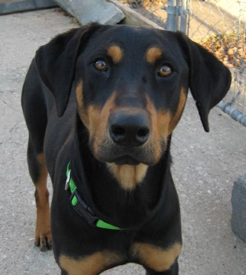 Dog Breeds B Black And Tan Coonhound Page 9