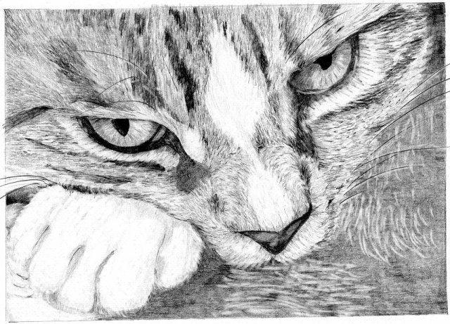 Image - 7. Chat. - Dessins-Crayon - Skyrock.com | Dessin | Pinterest ...