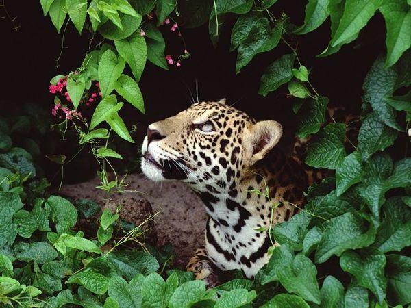 amazon rainforest plants and animals. animal tropical rainforest plants and animals amazon a