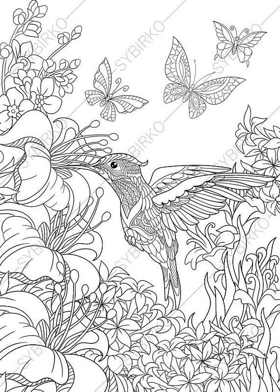 Coloring pages for adults. Hummingbird. Adult coloring
