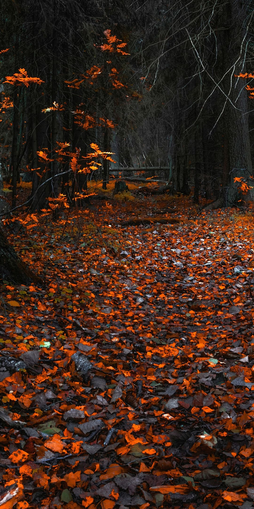Autumn Orange Leaves Forest Nature 1080x2160 Wallpaper Autumn Leaves Wallpaper Cute Fall Wallpaper Halloween Wallpaper Iphone