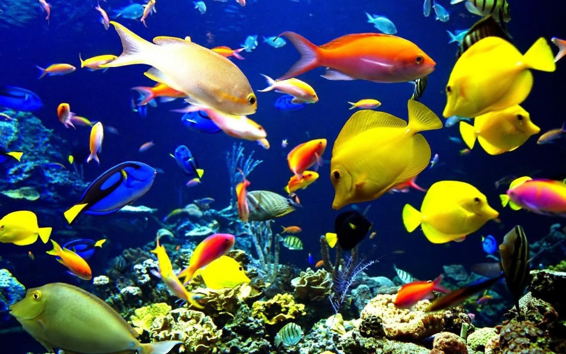Screensavers Free Downloads Fish Wallpaper Ocean Animals Beautiful Fish