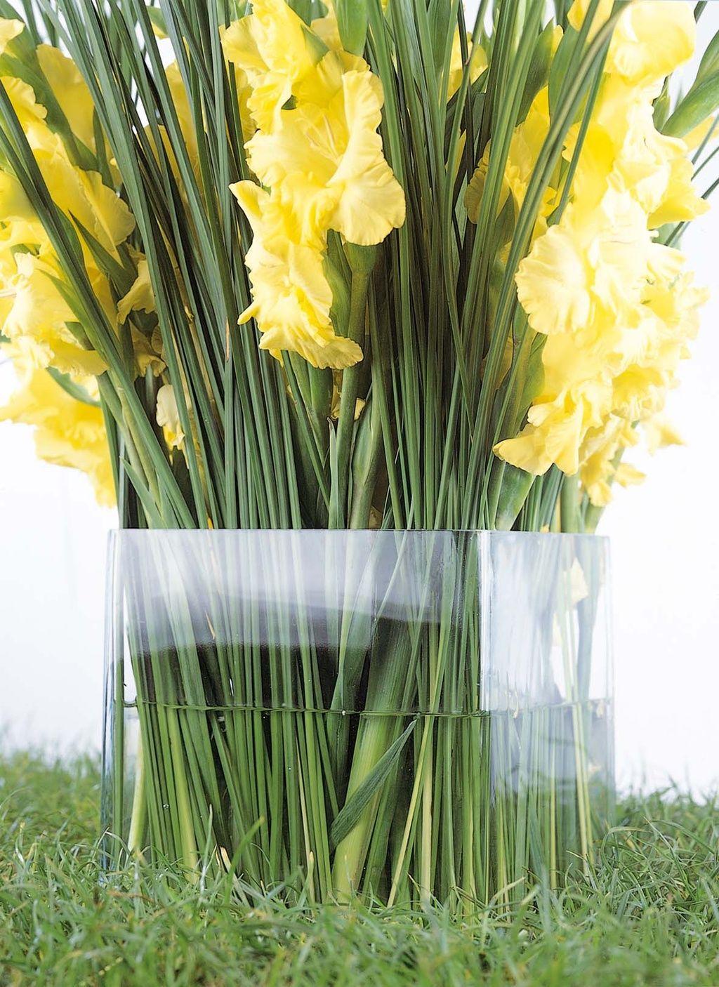 das was quadratische glasvase in kombination mit der gelben gladiolen ist wirklich perfekt. Black Bedroom Furniture Sets. Home Design Ideas