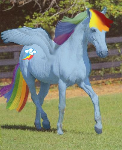 This Is Rainbow Dash In Real Life From My Little Pony