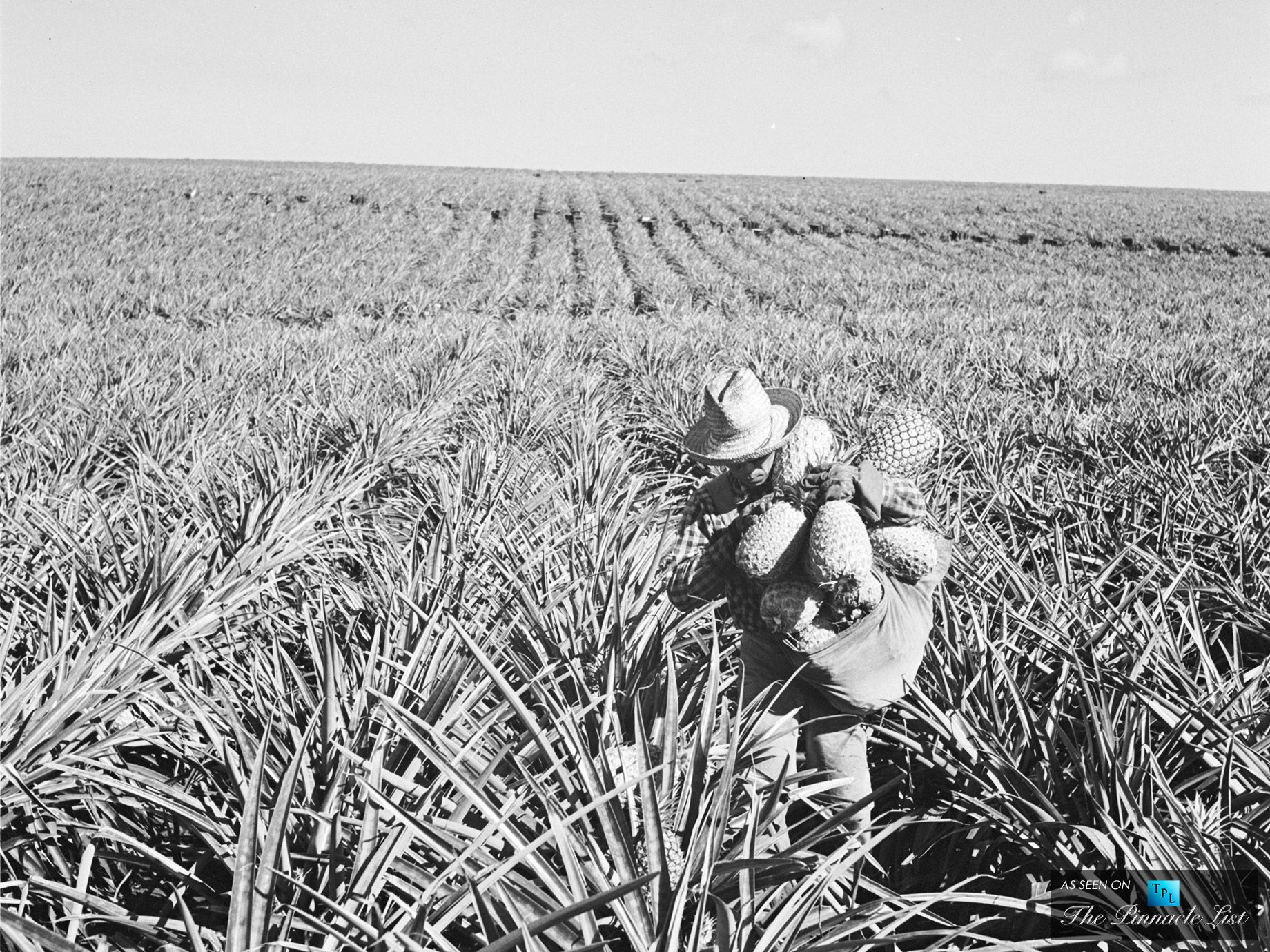 Historical Pineapple Fields in Lanai, Hawaii for the Dole