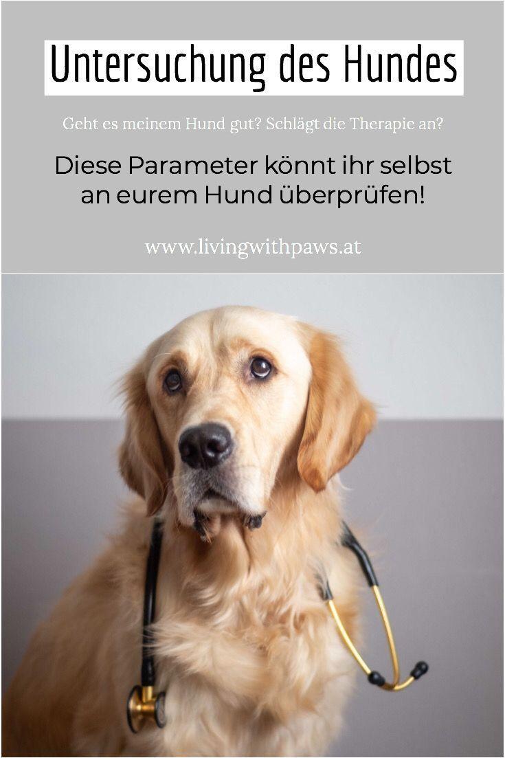 Vitalparameter Beim Hund Hunde Gesunde Hunde Und Hundegesundheit