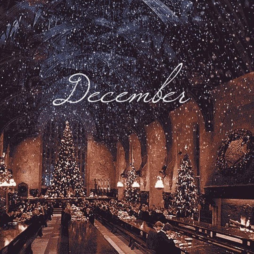 sapin décoration déco froid neige glace cadeau cadeaux noel noêl noël #september #christmastime #christmasmood #christmasvibes #christmaslove #christmaslights #lights #christmastree #christmasdecor #christmasdecorations #christmas2019 #christmaslights #christmasmagic #christmasspirit #christmascountdown m#christmaspresents #christmasgift #christmaspresents #christmashappiness #happykids #happychildren #beautifulchristmastree #beautifulchristmasdecorations #itsbeginningtolookalotlikechristmas #decembrefondecran