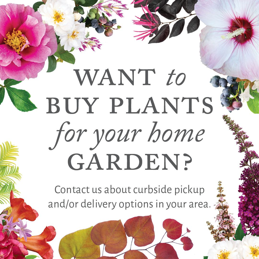 Are You A Local Garden Center Offering Plant Delivery Or Curbside