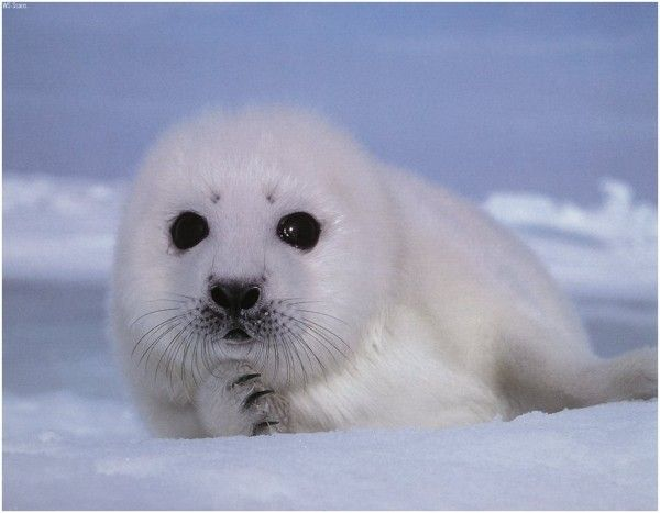 Such an adorable seal pup!