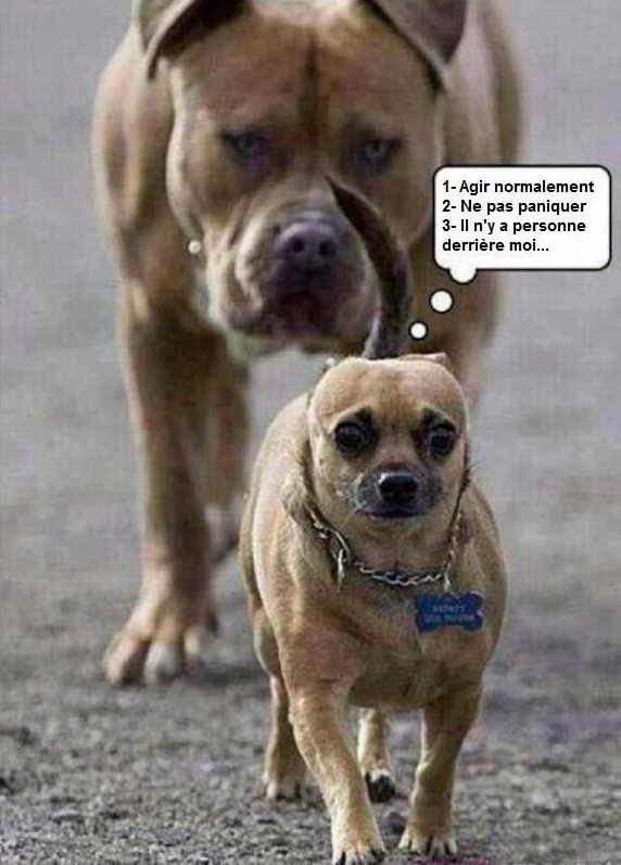 Agir Normalement Humour Chiens Humour Animaux Animaux Droles