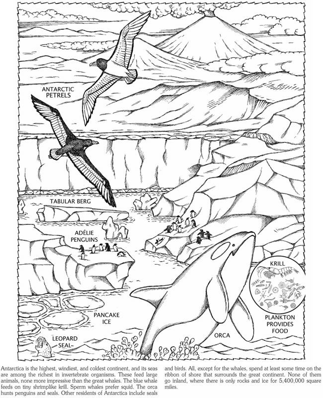 Race to the South Pole Coloring Book Dover Publications | Coloring ...