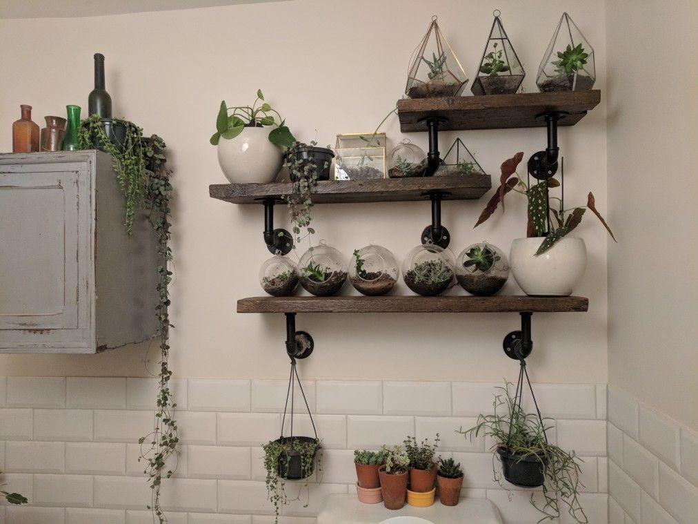 Bathroom succulents. Terrariums. Money plant. String of pearls ... on money plant in house, money plant in the garden, money plant in vase,