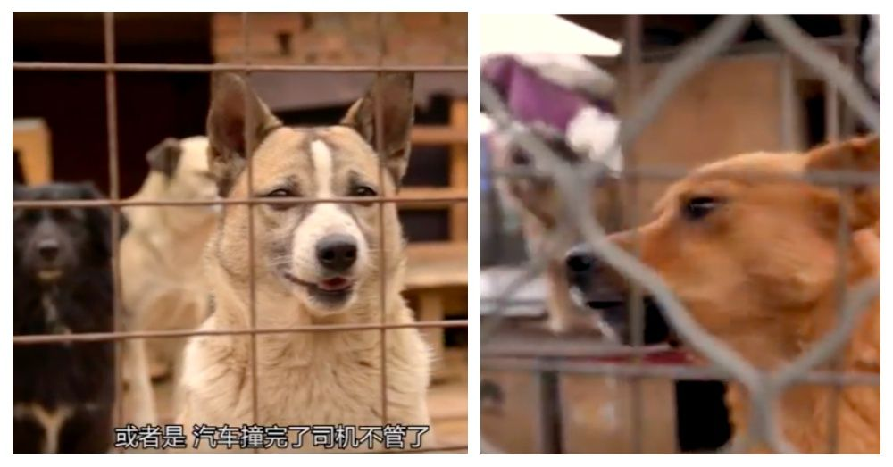 Two Chinese Women Devote Their Lives To Saving Animals In Poverty Stricken Area Save Animals Animals Poverty Stricken