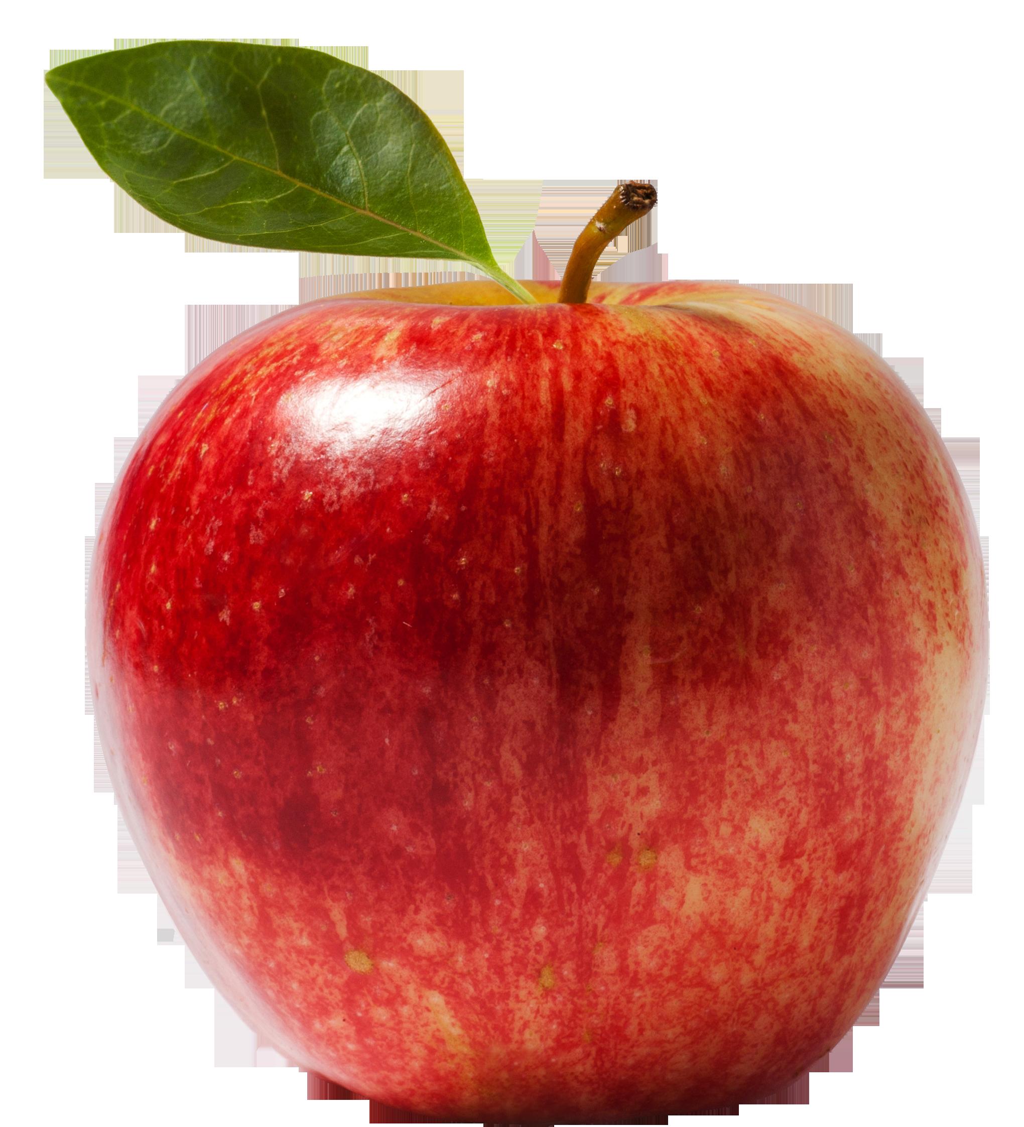 A Nemes Alma Vagy Hazi Alma Malus Domestica A Rozsaviraguak Rosales Rendjebe Es A Rozsafelek Rosaceae Csalad Watercolor Fruit Apple Picture Fruits Images