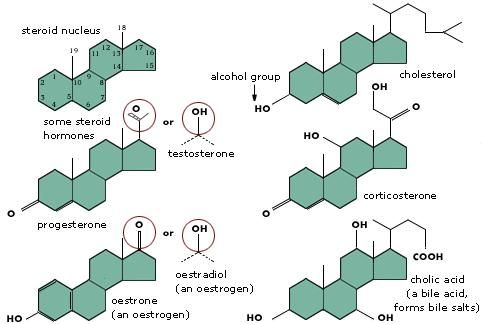 Illustration Of Steroids Structure Projects To Try Pinterest
